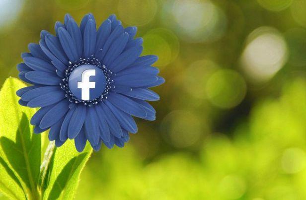 http_media.downloadblog.itbb72Facebook-fiore