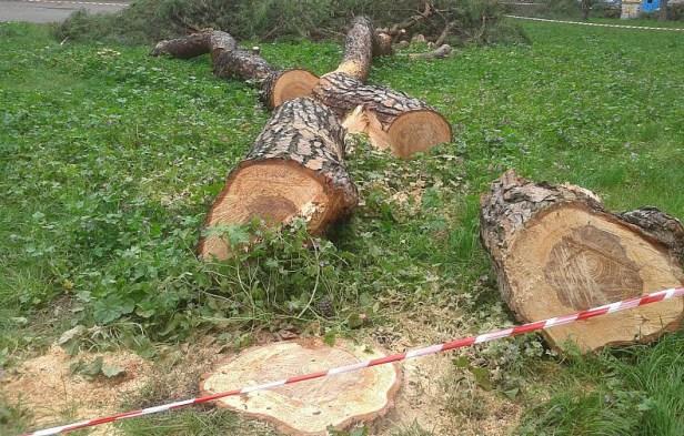 40-pini-vittoria-alberi-abbattuti--5-.jpg