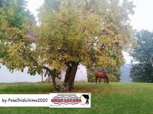 Immagine tratta da repertorio di Onda Lucana®by Pina Chidichimo 2020.jpg c