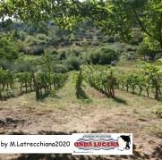 Immagine tratta da repertorio di Onda Lucana®by Maddalena Latrecchiana 2020 6