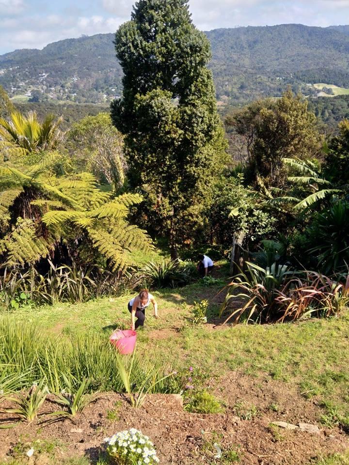 désherbage jardin nouvelle zelande wwoofing