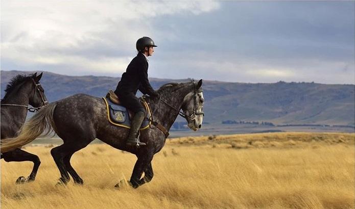 cavaliere sur un cheval au galop dans un champ jaune en nouvelle-zelande