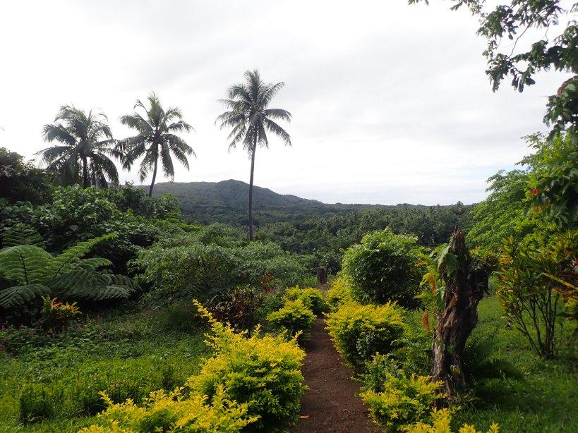 jardin avec palmiers au vanuatu