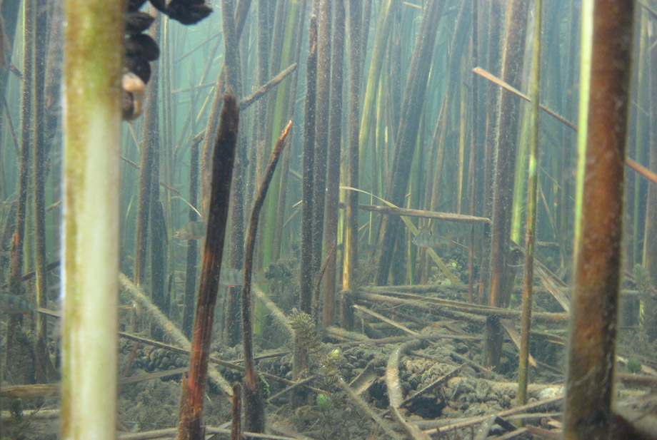fishing structure reeds