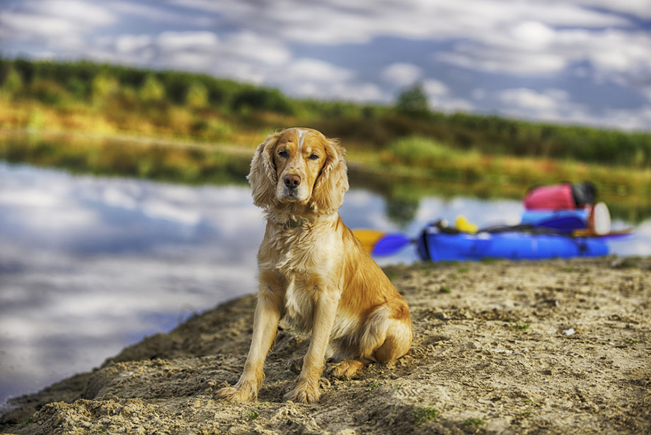 Dog And Kayak
