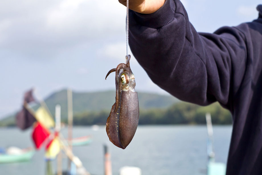 Man Holds Caught Squid In The Air