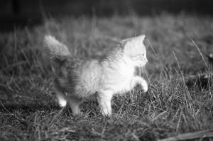 cat-1074781_960_720 (2)