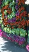bloemen en groenten