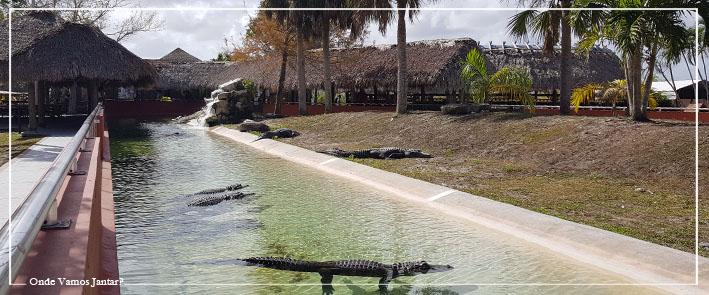 miami beach crocodilos everglade