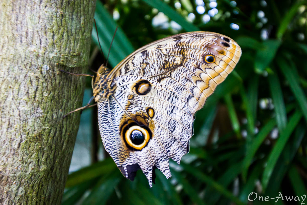 Butterfly on a tree at Fairchild Gardens Miami