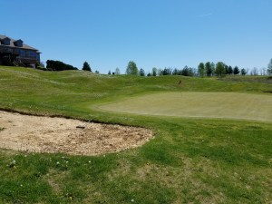 The bunkers aren't the only casualties of Old Silo's austere times: the chemical budget has been slashed as well, as dandelions dominated the course's landscape.