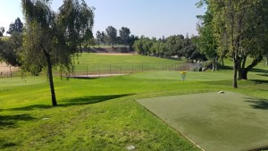 A view down the hill over the 2nd green with the rest of Colina Park in the background.
