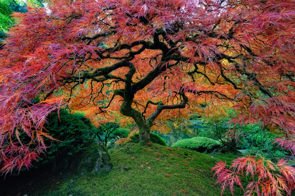 Beautiful Trees Photography The Highlanders