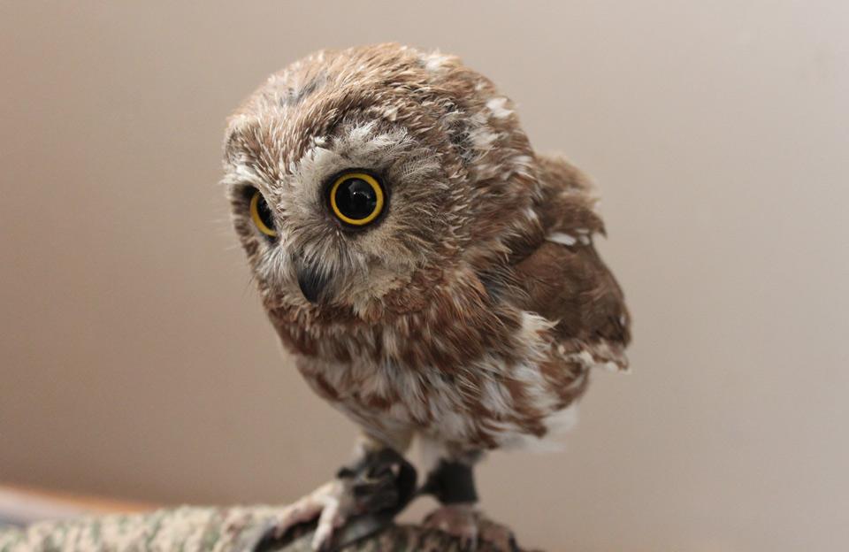 Image of: Youtube Cute Baby Owl One Big Photo Cute Baby Owl Photo One Big Photo