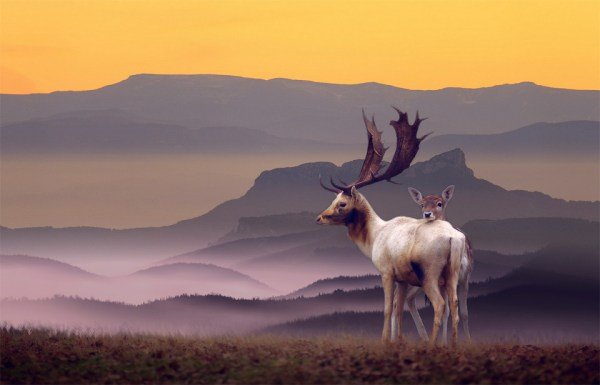 deer family in perfect landscape