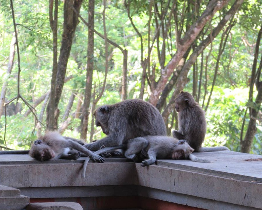 The Monkey Forest, Ubud Bali