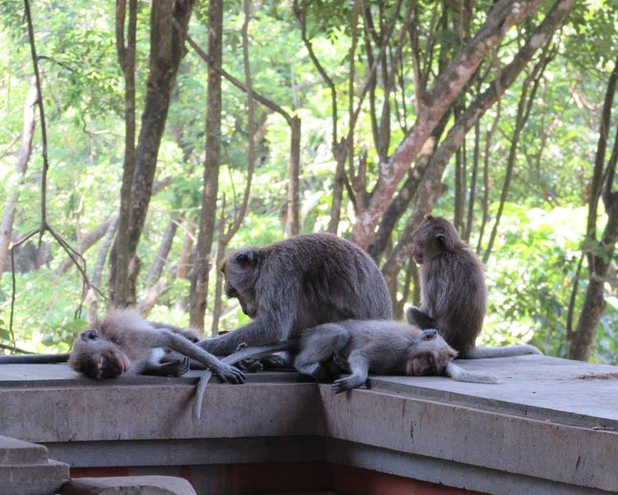 The Monkey Forest, Ubud Bali