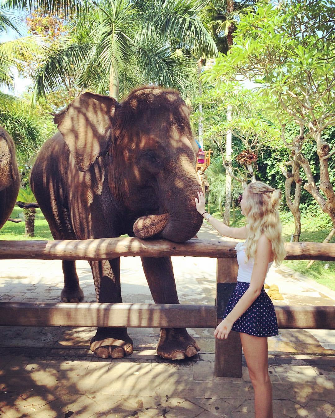 Meeting Elephants at Bali Zoo