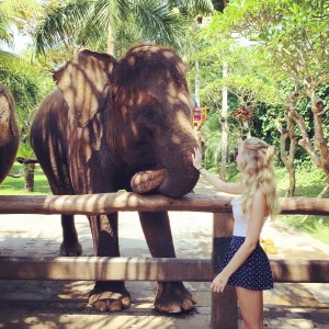 Meeting Elephants at Bali Zoo