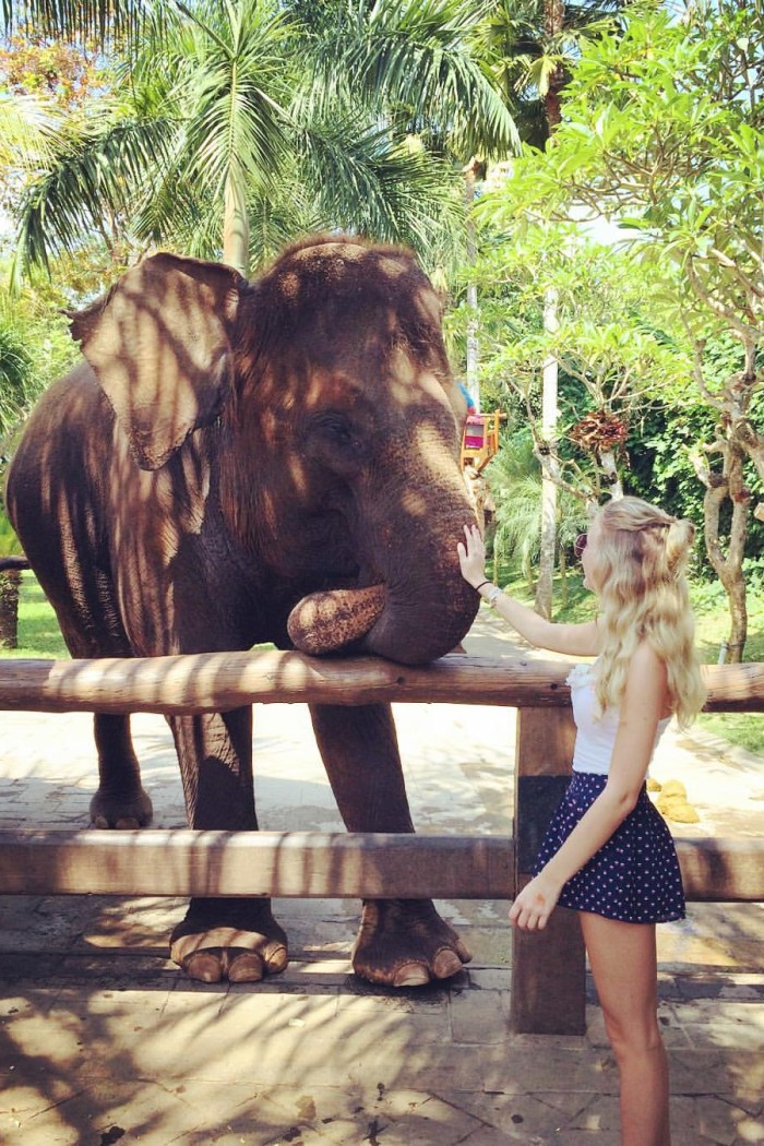 Day Trip to Bali Zoo