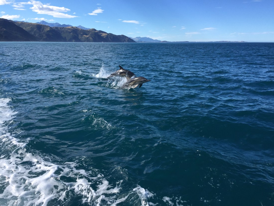 Dolphin Spotting in Kaikoura, New Zealand