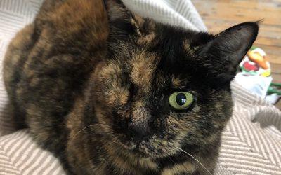 Birmingham, Alabama: The last cat sit on the trip