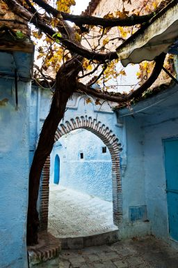 chefchaouen_medina_tree_mini