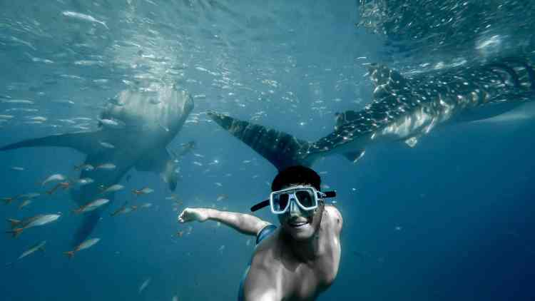 Must Do Things Australia whale shark