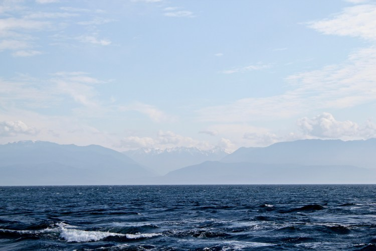Whale Watching in British Columbia, Canada | One Chel of an Adventure