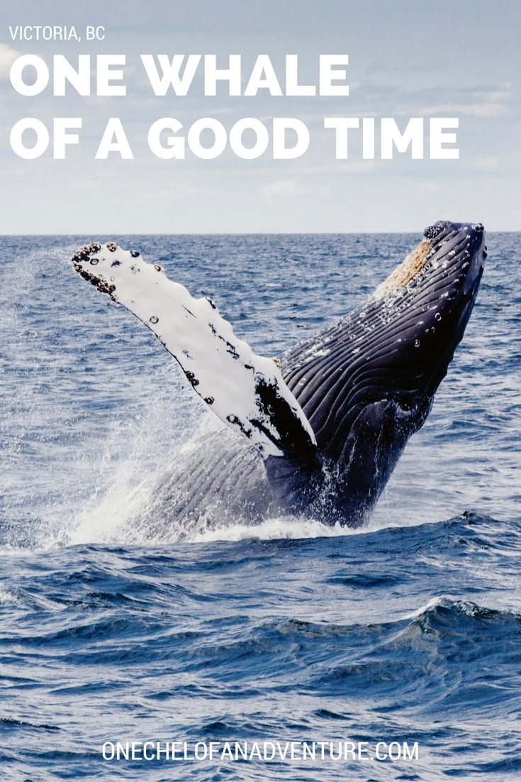 One Whale of a Good Time in British Columbia