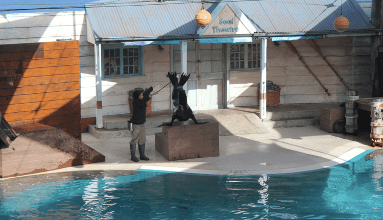 Seal Show at Sydney Taronga Zoo