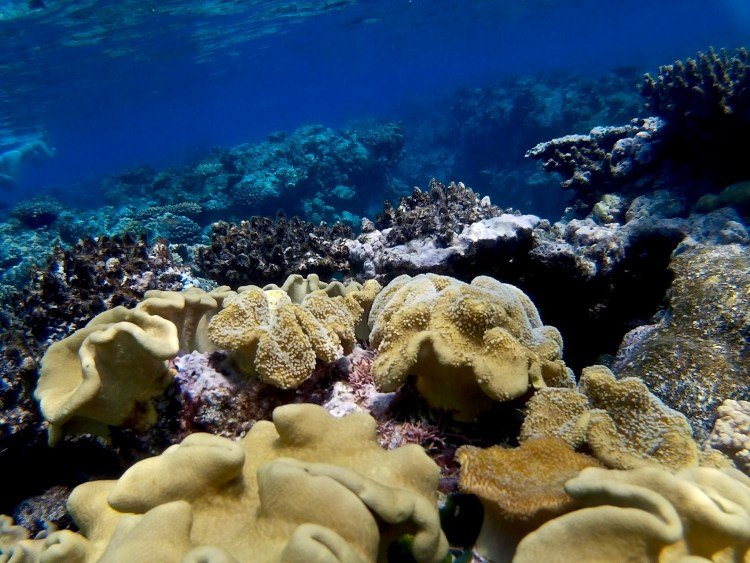 The Great Barrier Reef: From Above and Below