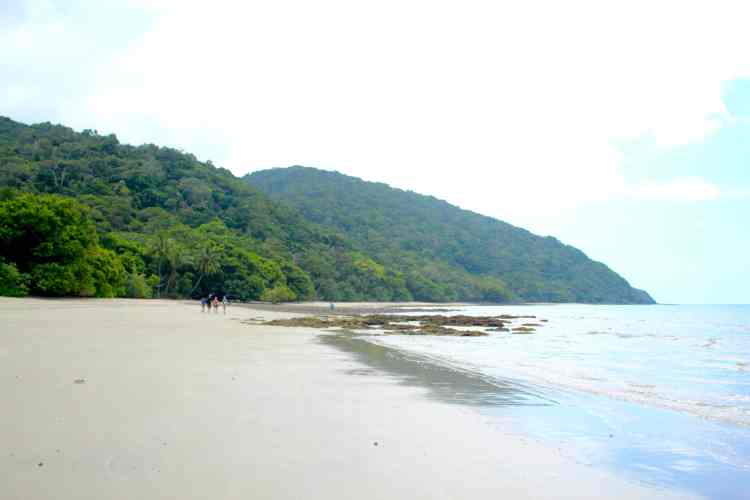 The Cairns Tour You DON'T Want to Book | Cape Tribulation and Daintree Rainforest