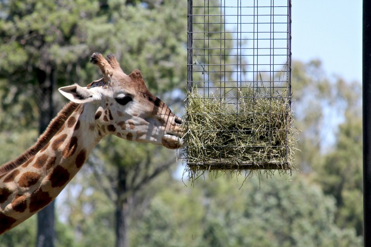 Taronga Western Plains Zoo: A Wild Weekend Getaway From Sydney