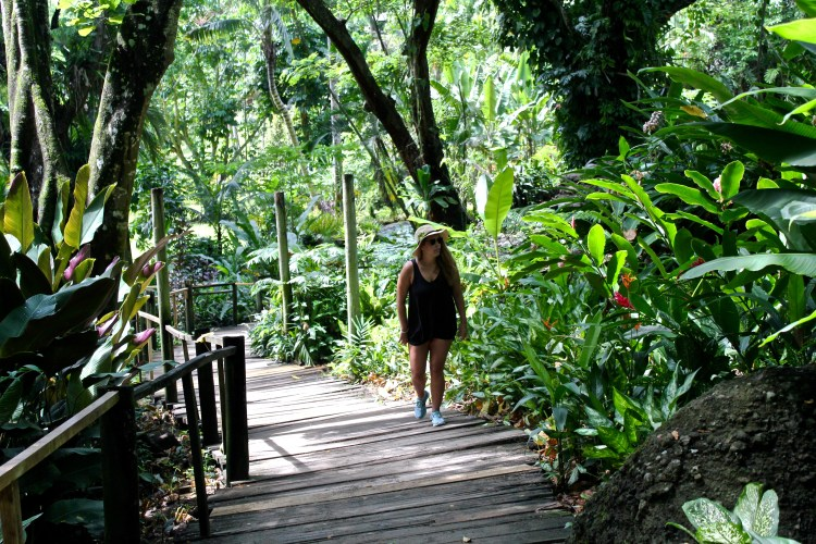 A Fiji Must: Garden of the Sleeping Giant | Orchid Garden