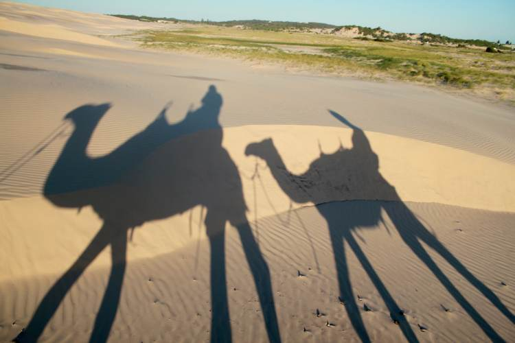 Camel shadows in sand dunes