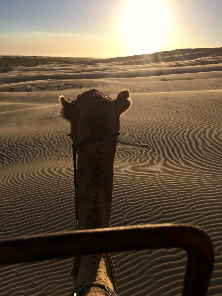 stockton sand dunes camel ride