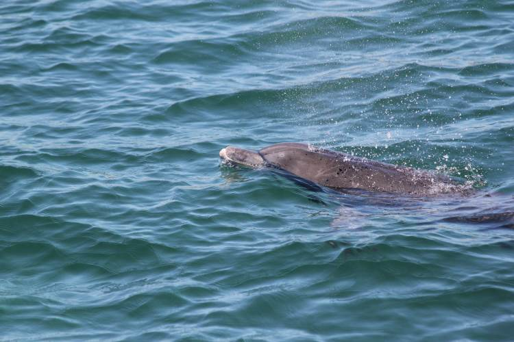 Port Stephens Dolphin Watching Cruise