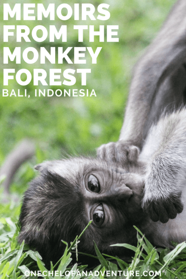 Memoirs from the Monkey Forest | Ubud, Bali, Indonesia Must Do