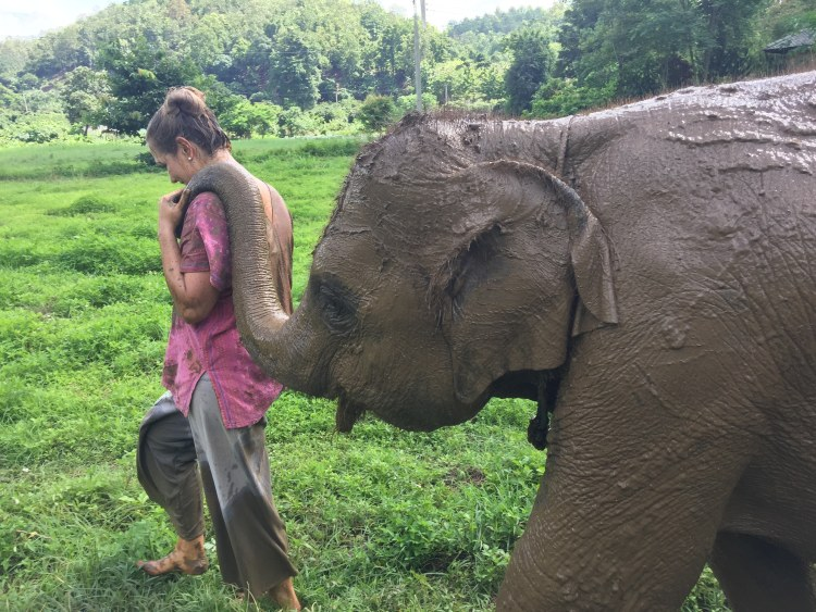 see Elephants Responsibly at Ran-Tong Rescue Elephant Center