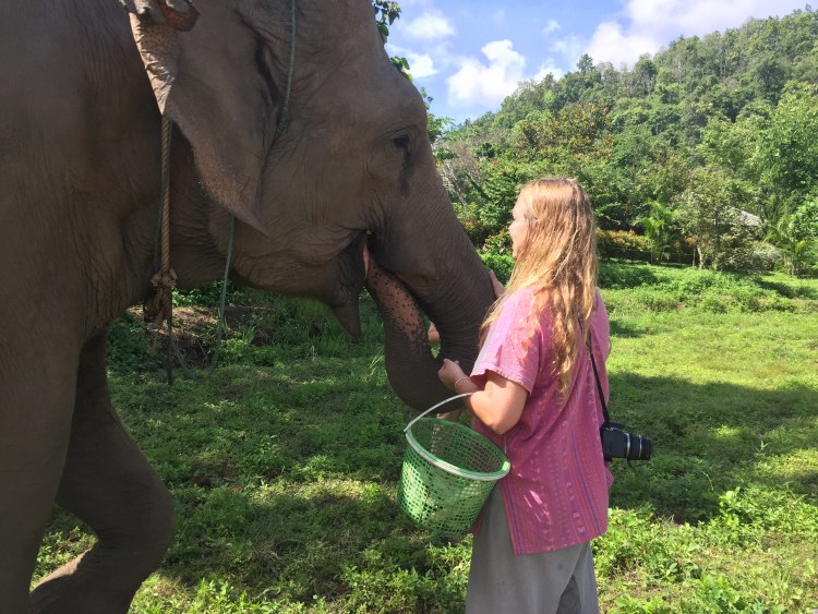 where to See Elephants Responsibly in thailand