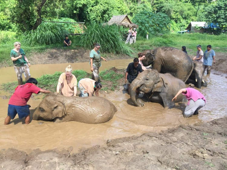 taking care of elephants at sanctuary