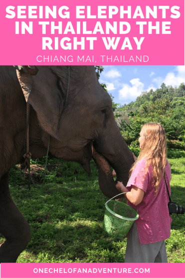 Seeing Elephants in Thailand the Right Way -- Responsible Animal Tourism | CHIANG MAI, THAILAND