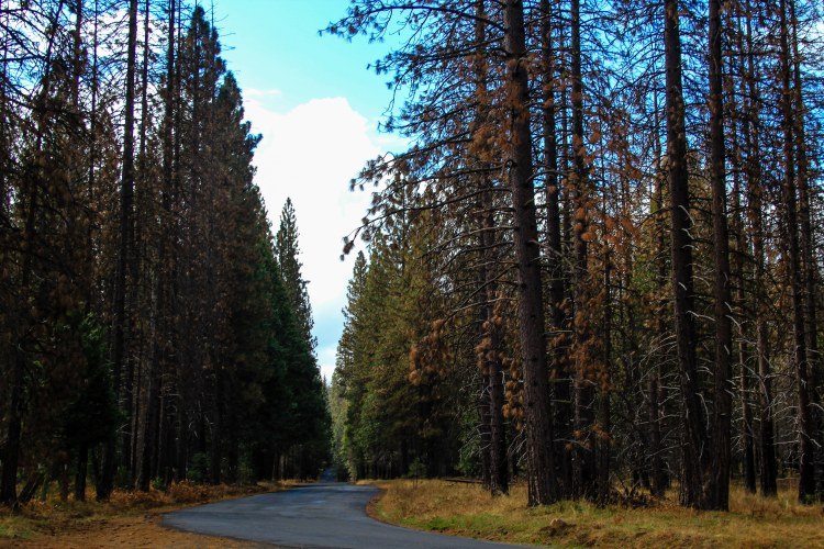 10 Stunning Photos from Yosemite Valley Drive-road