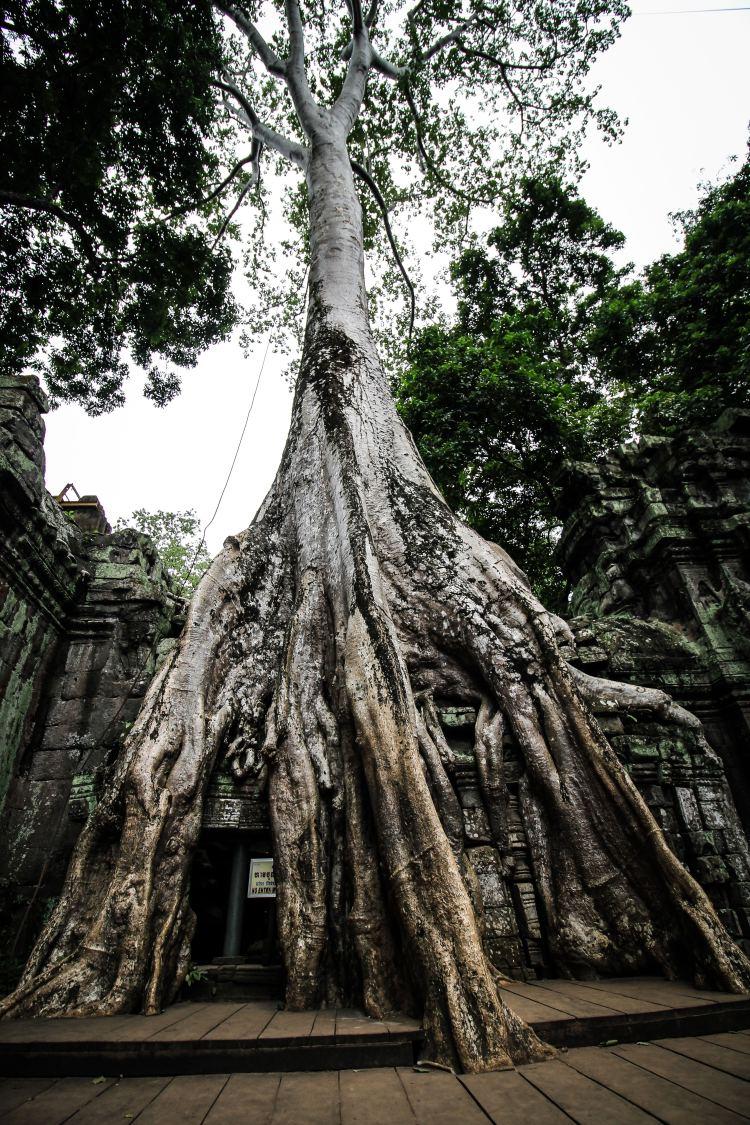 20 Photos From Angkor Wat, Cambodia 12