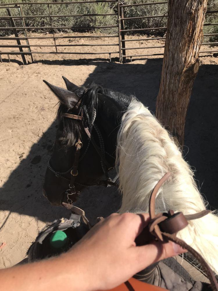 Horseback Riding at Zion Mountain Ranch | Zion National Park Horseback Riding