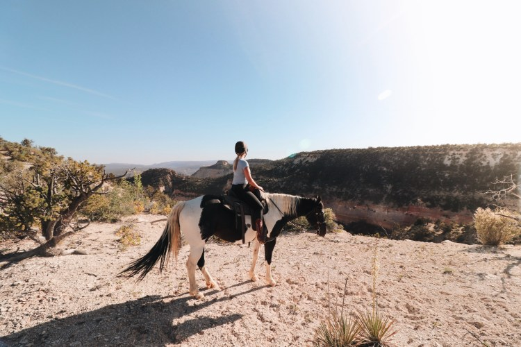 Horseback Riding zion canyon overlook trail