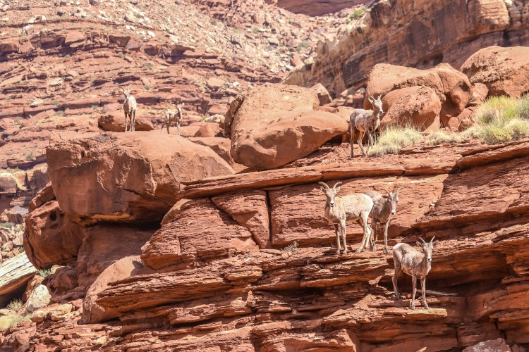 1-Day Tour of Canyonlands and Arches National Park-7665
