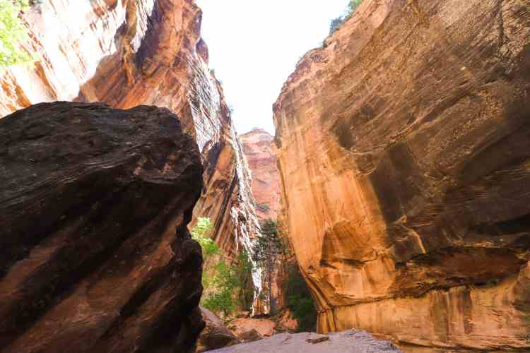 Hiking The Narrows - Zion National Park-6970
