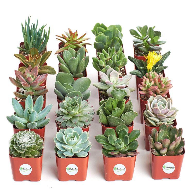 Unique Gift Ideas Under $50 - succulents
